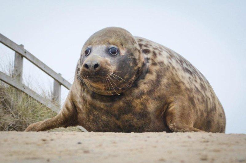 Тюлениха чуть не умерла из-з…