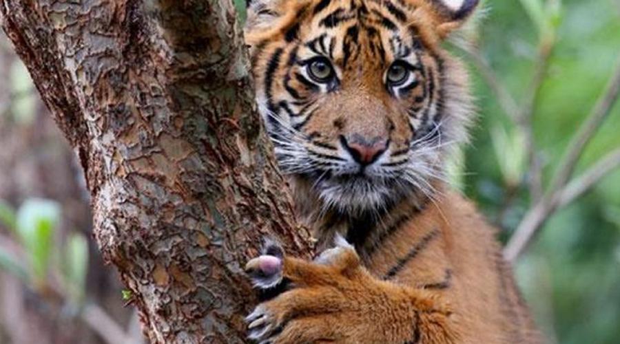 10 потрясающих кошек, которые уже почти исчезли