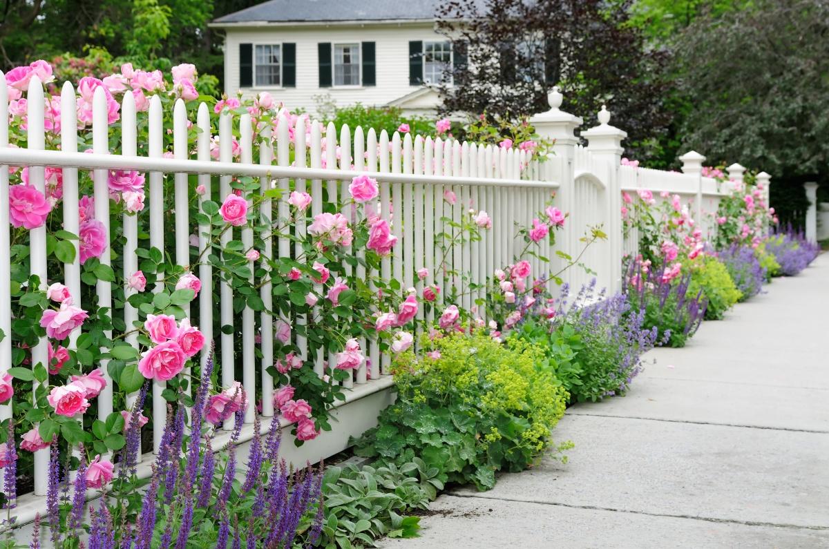 картинки из цветов на забор