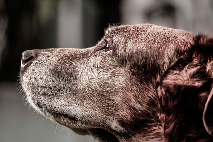 Про собаку, которая решила сменить себе хозяина…