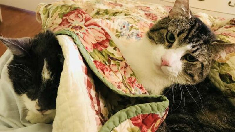 Обычная американская учительница потратила 19 тысяч долларов на пересадку почки коту