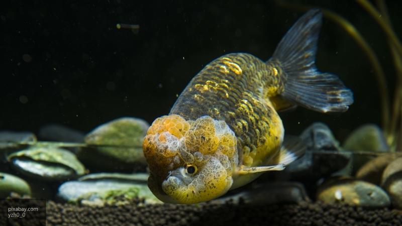 Рыбак из США поймал столетнюю рыбу-мутанта