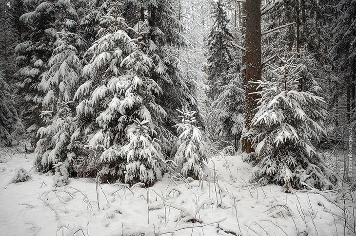 Фото Сергея Странника - декбарь 3
