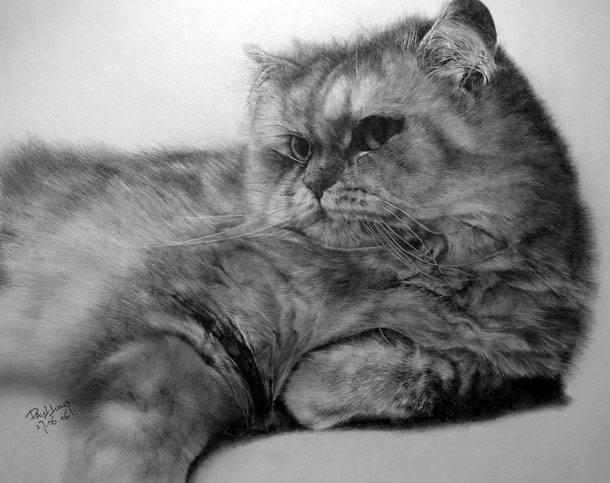 Невероятные рисунки кошек пр…