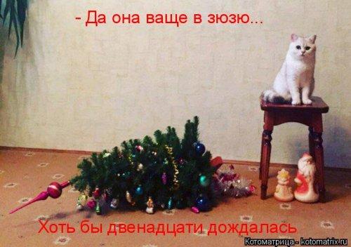 Январская котоматрица этой н…