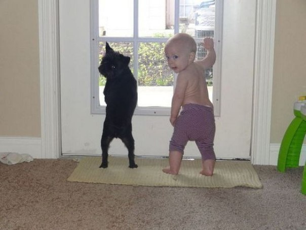 Детки и животные