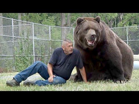 Увидев Мужчину, 680-Килограммовый Медведь Бросился К Нему. А Дальше Случилось Невероятное!