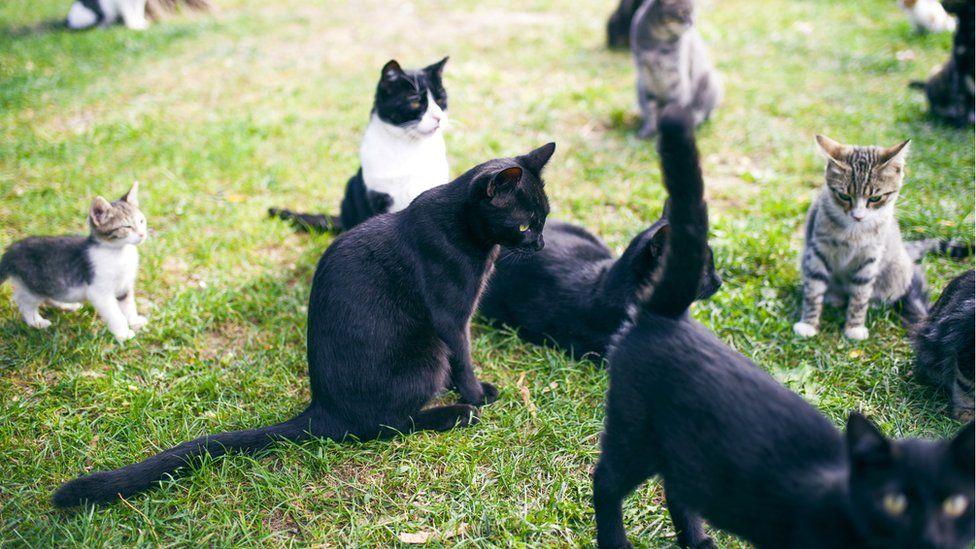 По наблюдению Маржан Дебевер, не найти и двух кошек с одинаково звучащим мурчанием