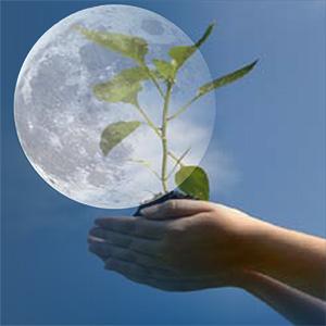 Стоит ли огородникам следовать лунному календарю?