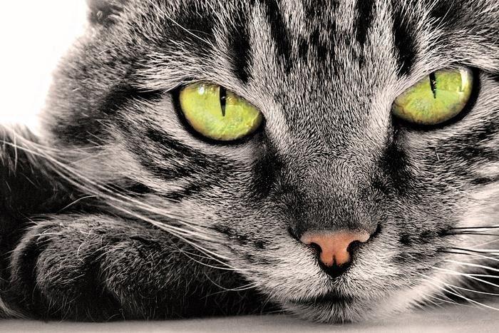 Кошка - показатель благополу…