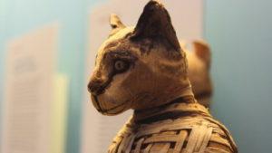 Как кошки покоряли мир