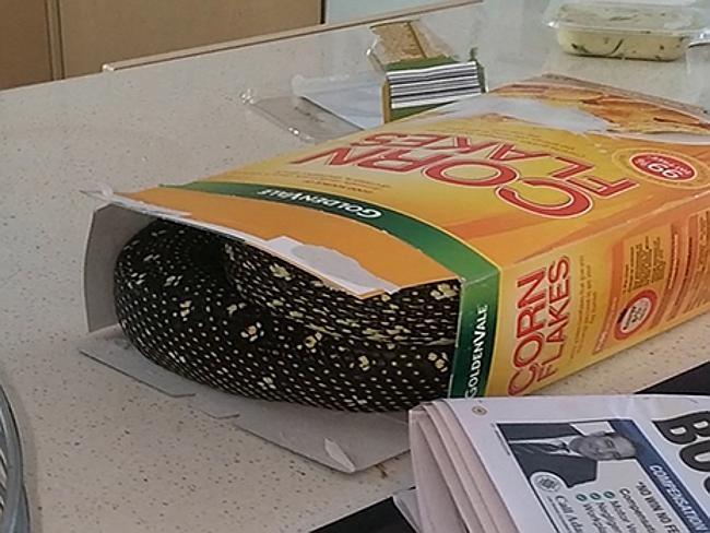 Такие вот хлопья на завтрак австралия, змея