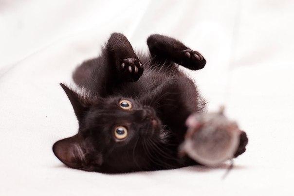 Черненький малыш Шнапсик в самые добрые руки. Москва и МО