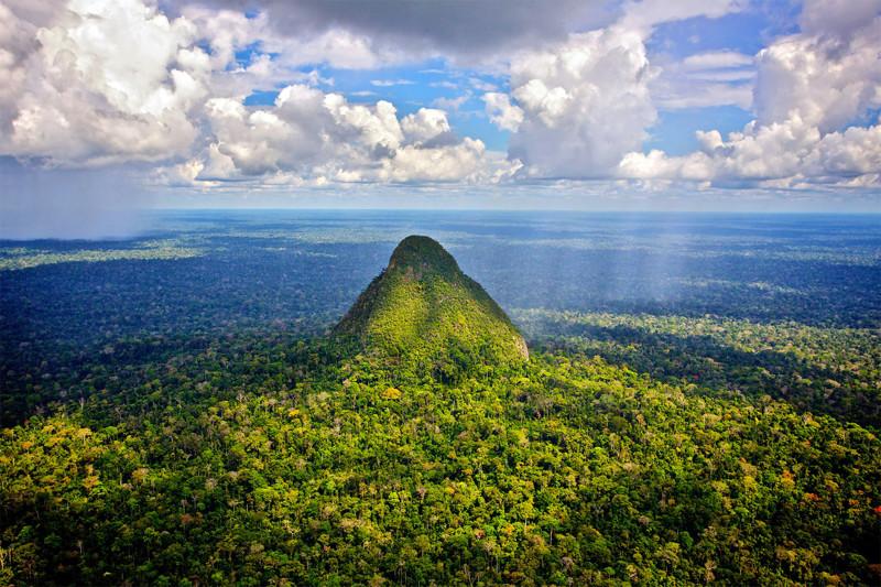 Дождевые леса Амазонии география, интересное, первооткрыватели, планета земля
