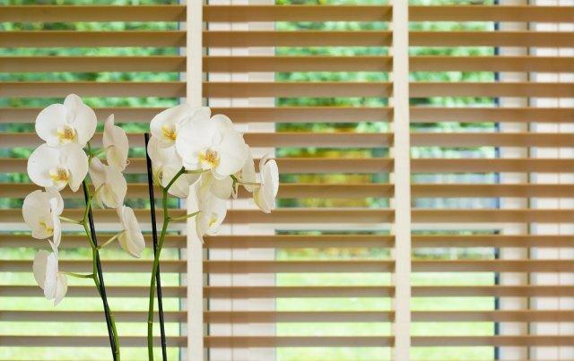 Притенение орхидеи на окне