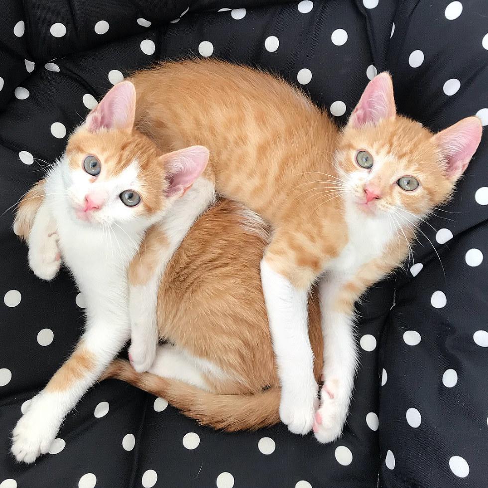 хотите картинки с семью котиками семья