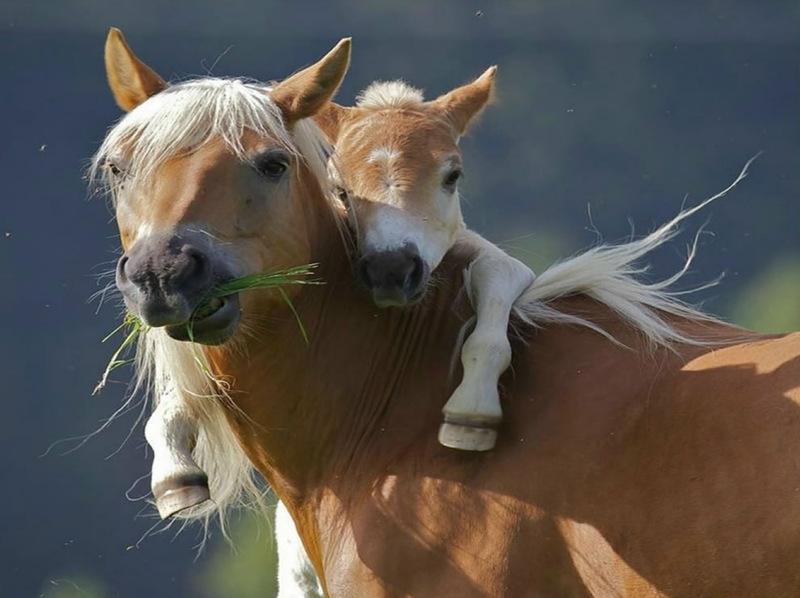 Мамины детки (фото)