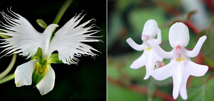 Прекрасные цветы, похожие на…