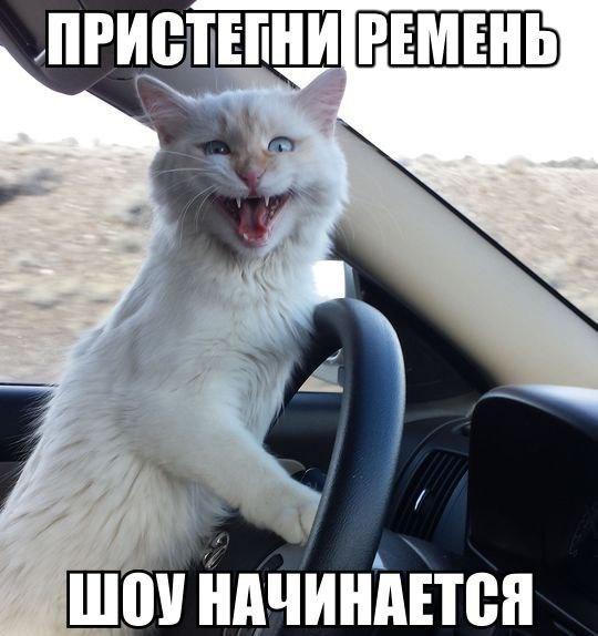 Прикольные картинки коты с надписями за рулем, клеточкам интересные