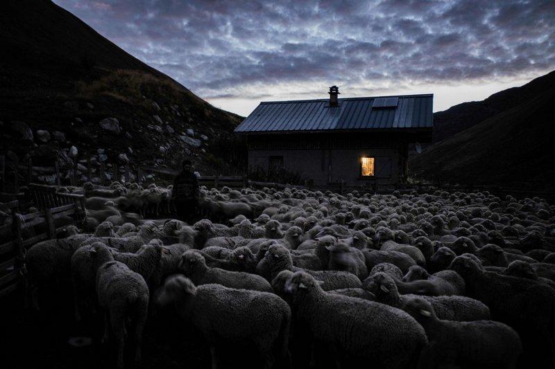 Овцы в ночном загоне рядом с его избушкой Альпы, жизнь, пастух, работа