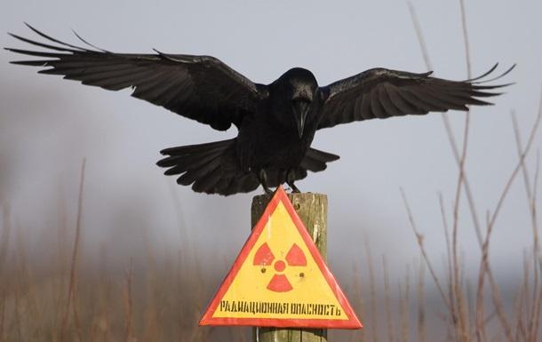 Дикие животные, живущие в Чернобыльской зоне отчуждения