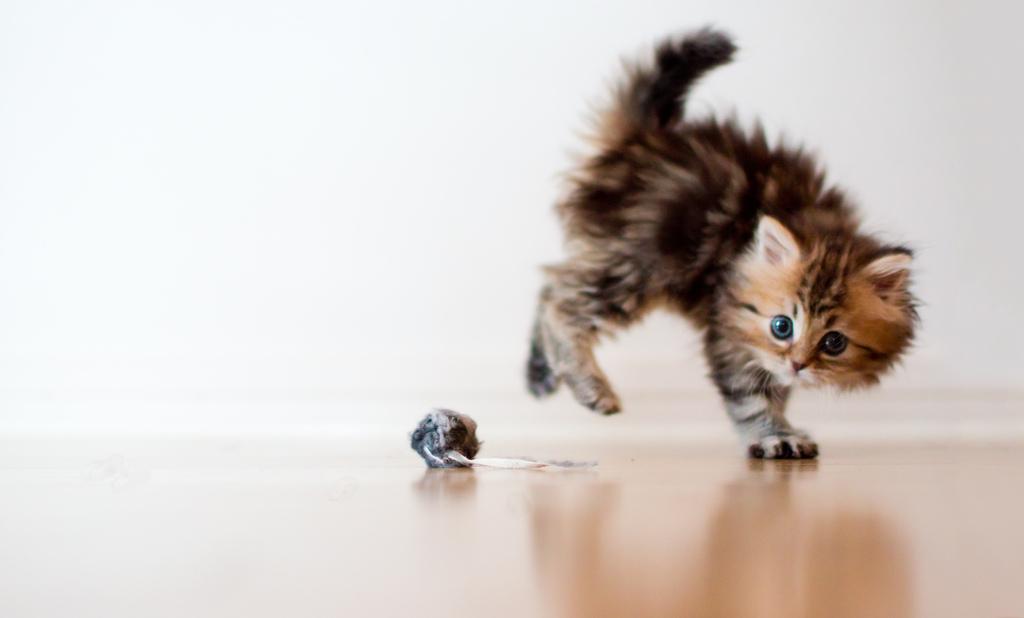 Море положительных эмоций от такого маленького котенка