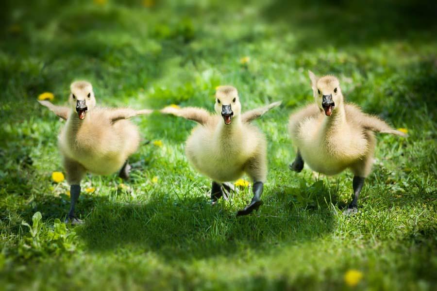 Картинки животных и птиц веселые