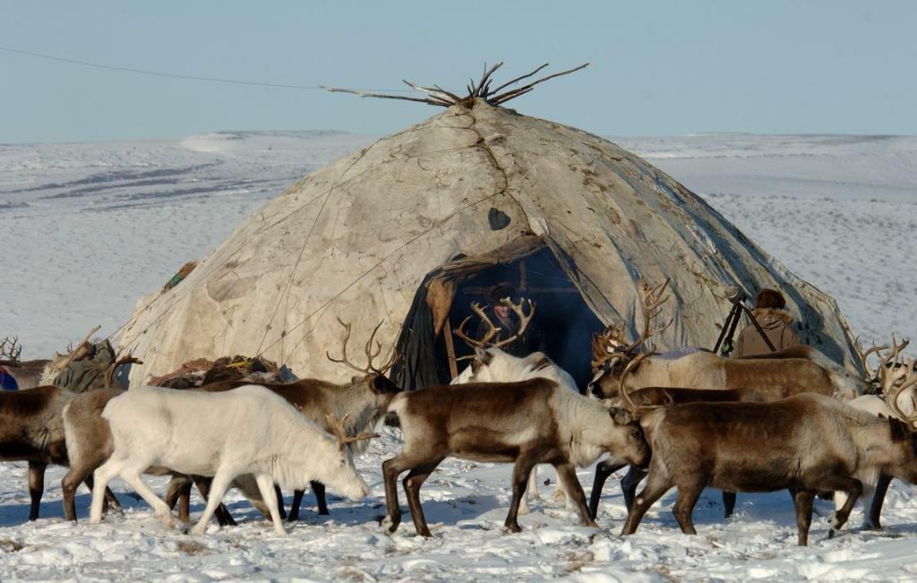 удивило, как живут на крайнем севере фото коллекции миллионы