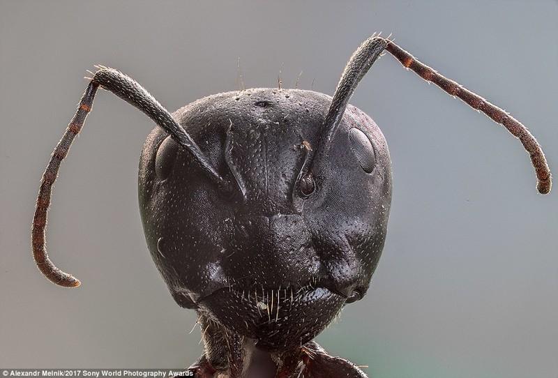 Чужой. Портрет муревья-древоточца, сделанный с помощью макросъемки искусство, конкурс, красота, фото
