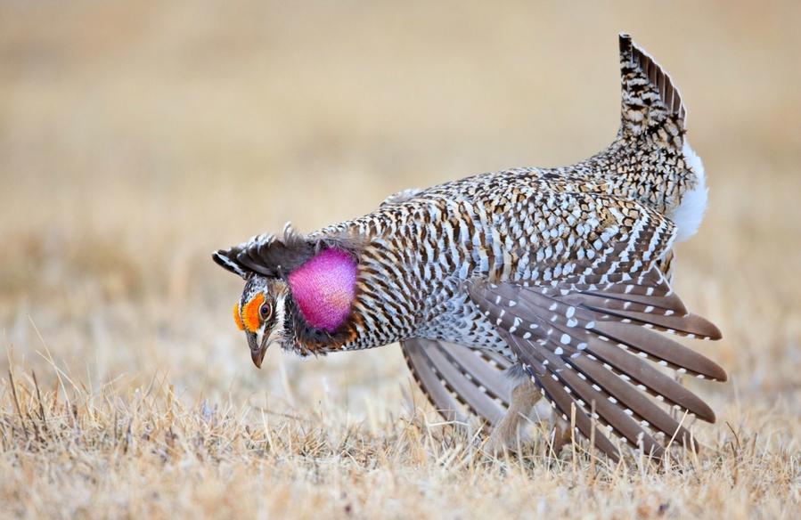 идеальная фотография птица мое