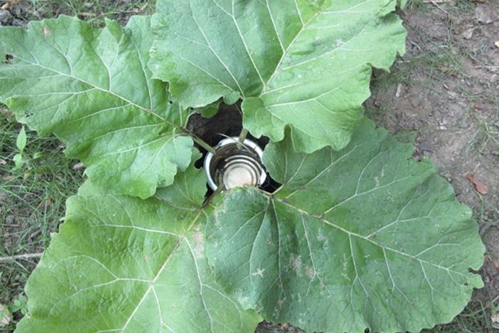 Использование листьев в быту