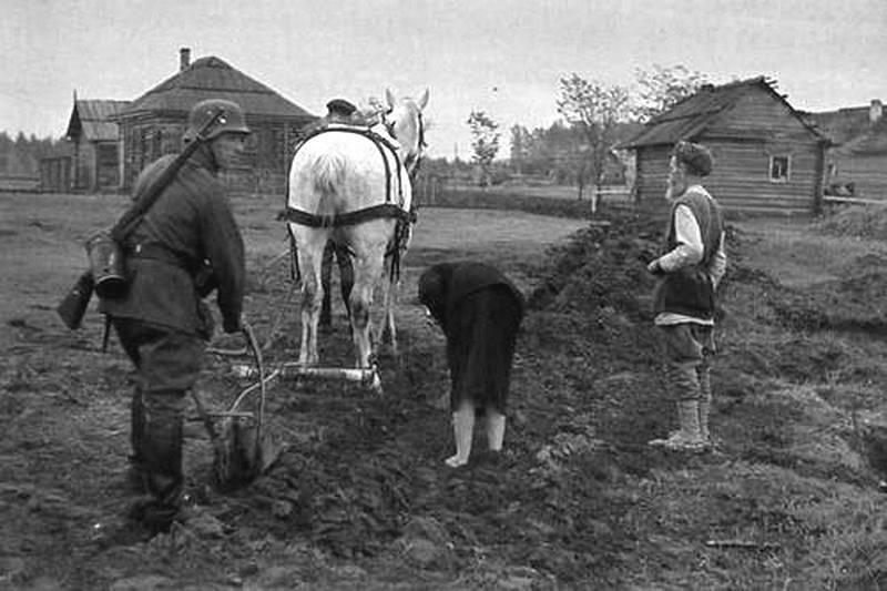 Урожаи и заготовки хлеба на оккупированных территориях СССР история