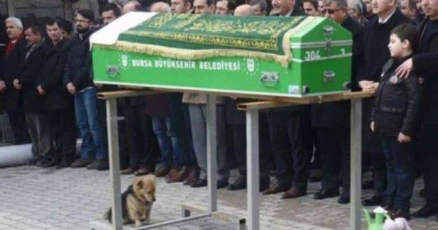 Маленькая собачка с грустными глазами подошла к гробу и присела рядом. Присутствующие были удивлены тому, что произошло дальше...