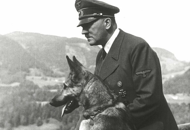 «Овчарка Дауфмана»: почему её называли «Монстром Третьего Рейха» жизнь,история,курьезы,факты