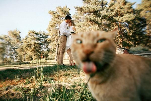 Коты, которые пытались  испо…