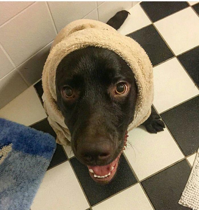 Когда щеночек похож на бабушку банный день, ванна, животные, купание, шок