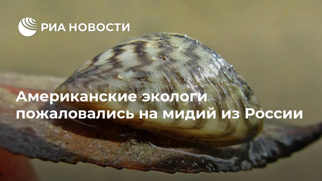 Американские экологи пожаловались на мидий из России Лента новостей