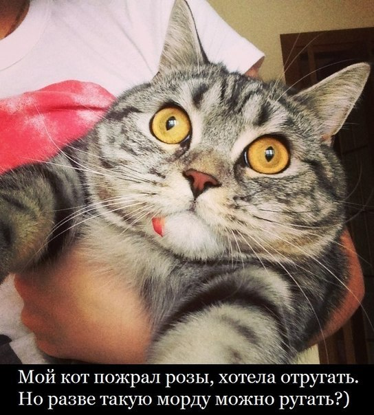 Эллегия о мартовских котах
