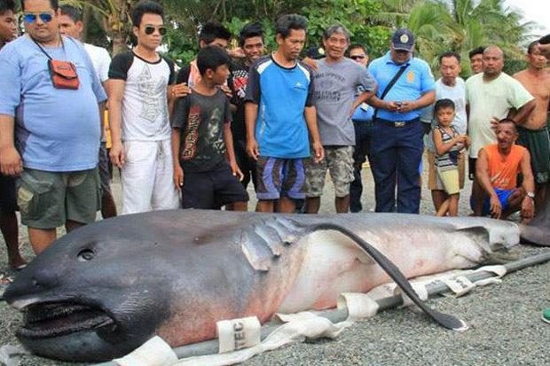 На пляж Филиппин выкинуло ре…