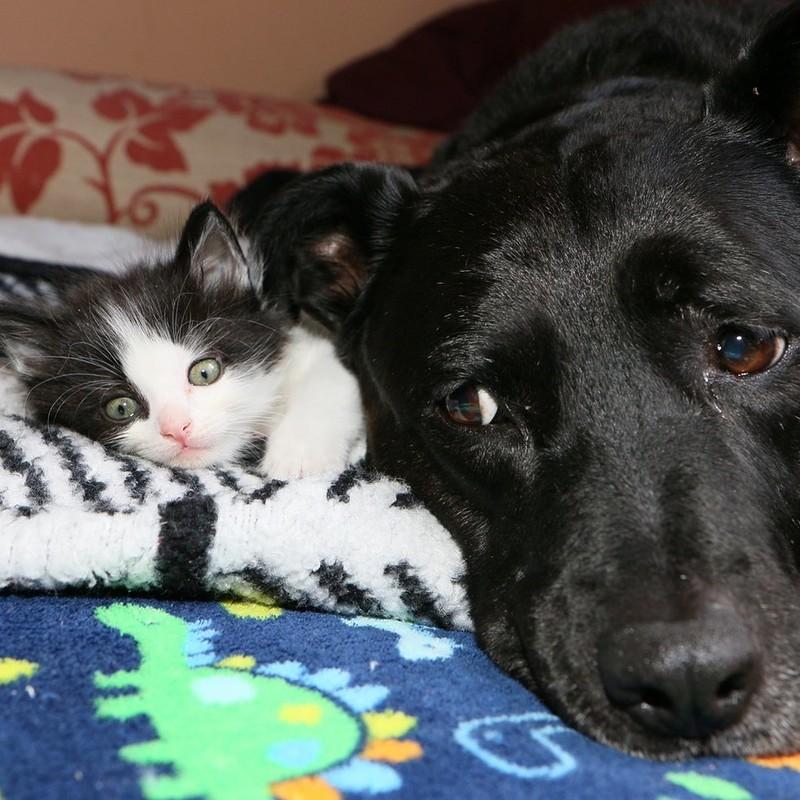 Собака воспитала почти 100 котят после того, как потеряла лучшую подругу-кошку