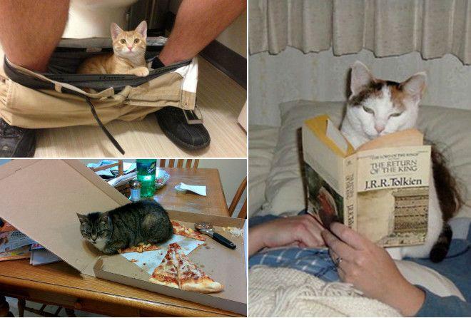 15+ наглых котов, которые плевать хотели на личное пространство своих хозяев