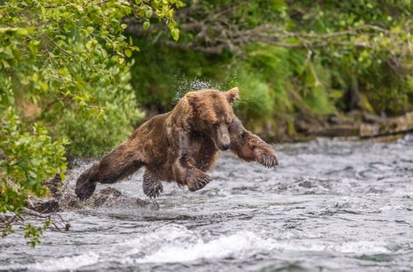 Забавная медвежья рыбалка по…