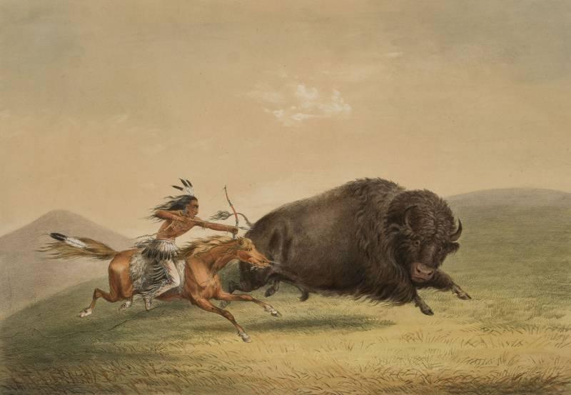 О последствиях одного сафари… история