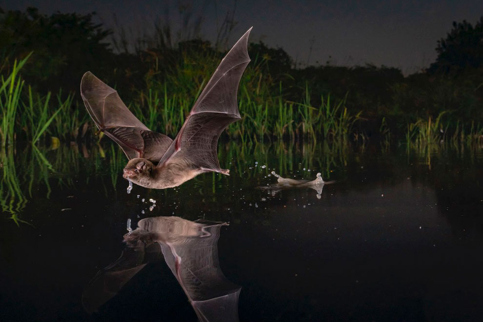 Лучшие работы с конкурса BigPicture Natural World Photography 2020