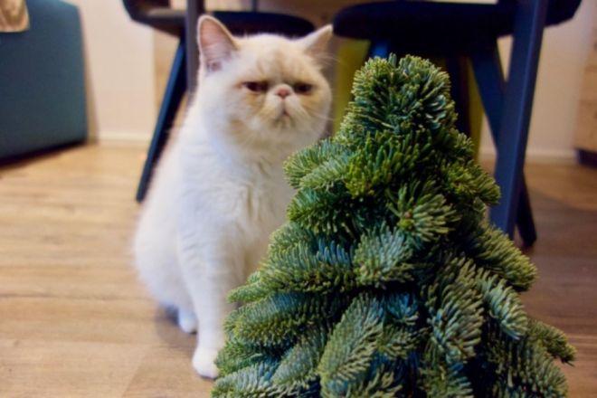 Коты и новогодние ёлки: 30 фото из серии «она сама упала!» домашние животные