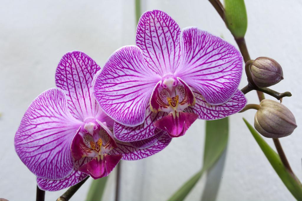 Орхидеи фото расцветки
