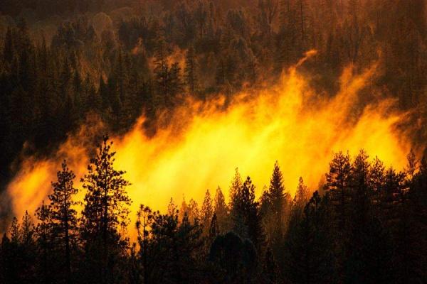 Лесные пожары вСибири засутки охватили еще 5000 гектаров