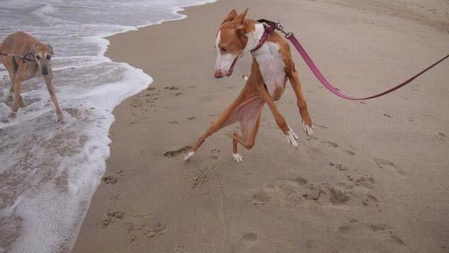 14 собак, которые до жути боятся воды. Такую мимику и у людей не часто встретишь…