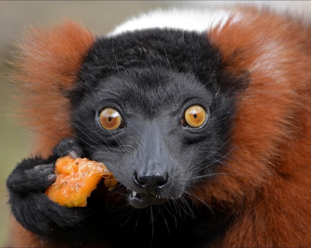 очень удивленные животные фото подчеркнуть, что выбирать