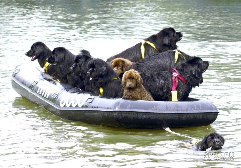 Собаки спасатели